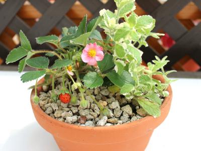 ハーブ・お花の寄せ植え