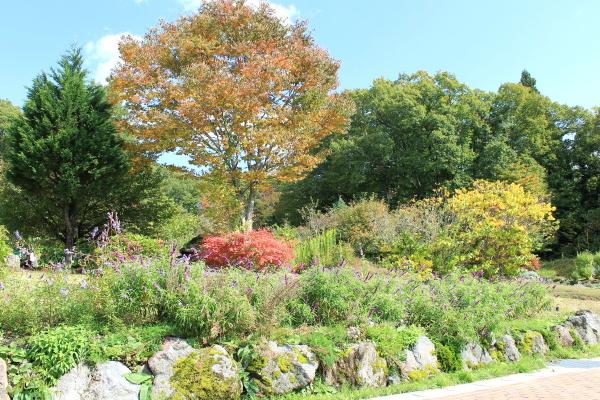 ガーデンがほんのり紅葉