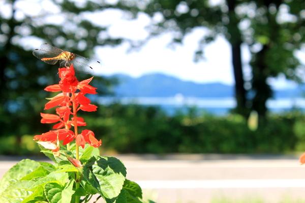 今朝の田沢湖