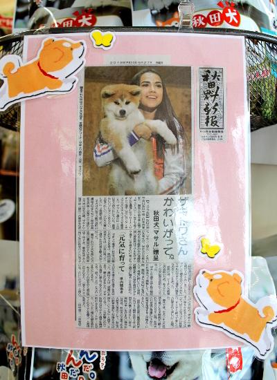 秋田犬 新聞