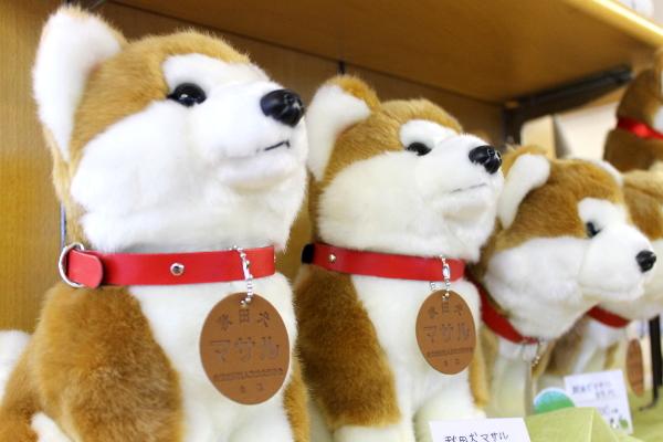 秋田犬マサル横顔