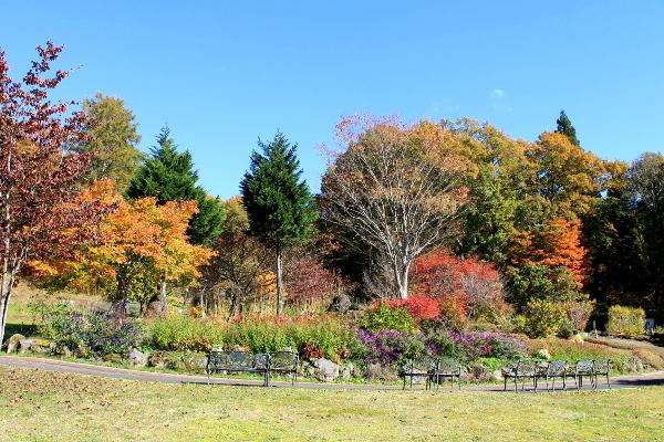 紅葉ガーデン