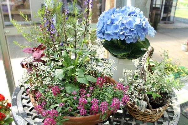 初夏のお花とハーブ